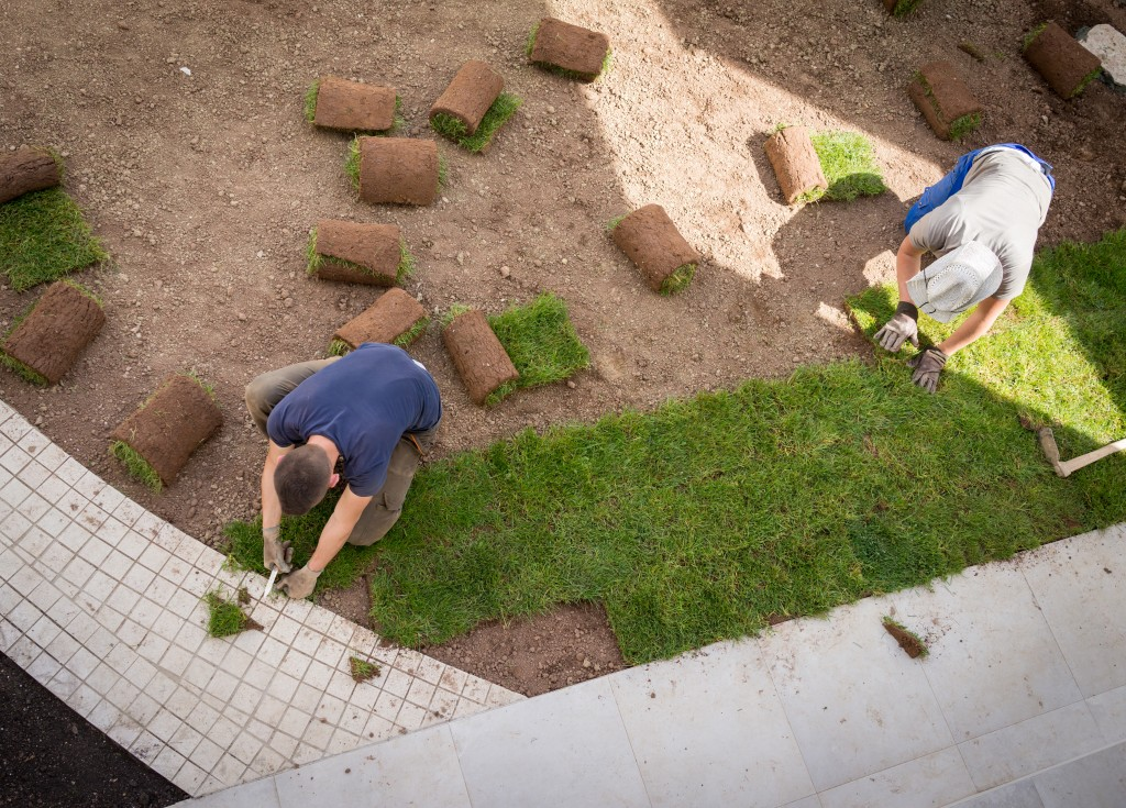Gardener Installing Natural Grass Turfs Creating Beautiful Lawn Field