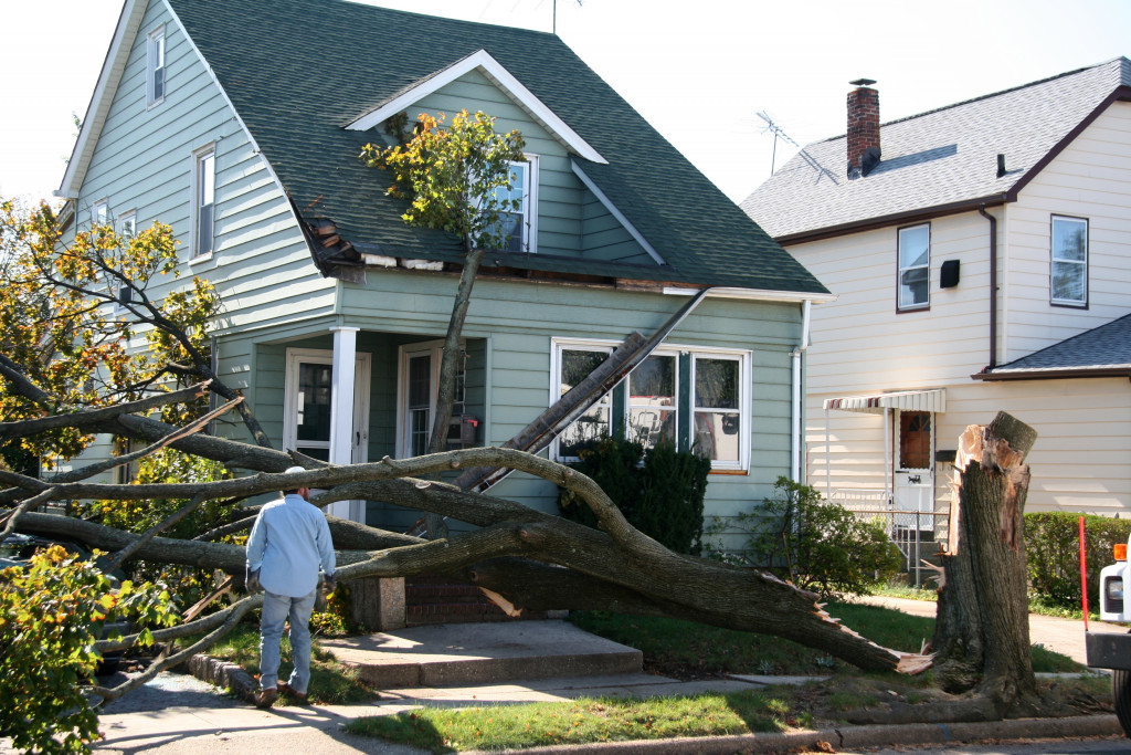 tree that fell down In front of a house